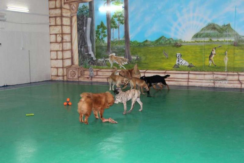 Kennel training center Dubai